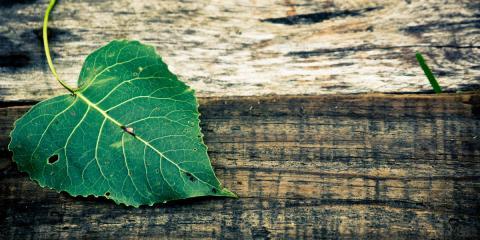 Impregnálás (rovar és gombamentesítés)